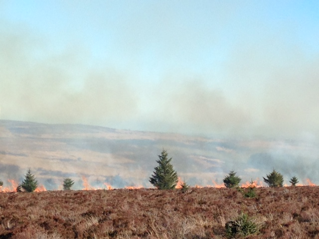 Scottish Wildfire Forum issue warning of increased wildfire risk