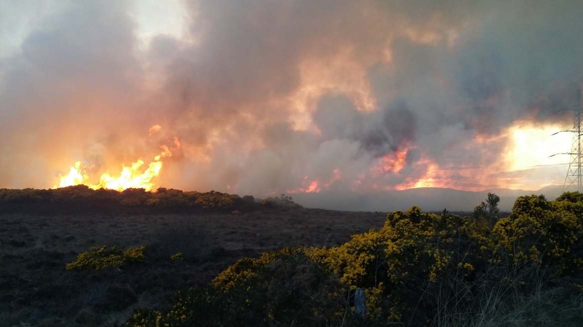 Firefighters tackle large wildfire near Inverness (1)