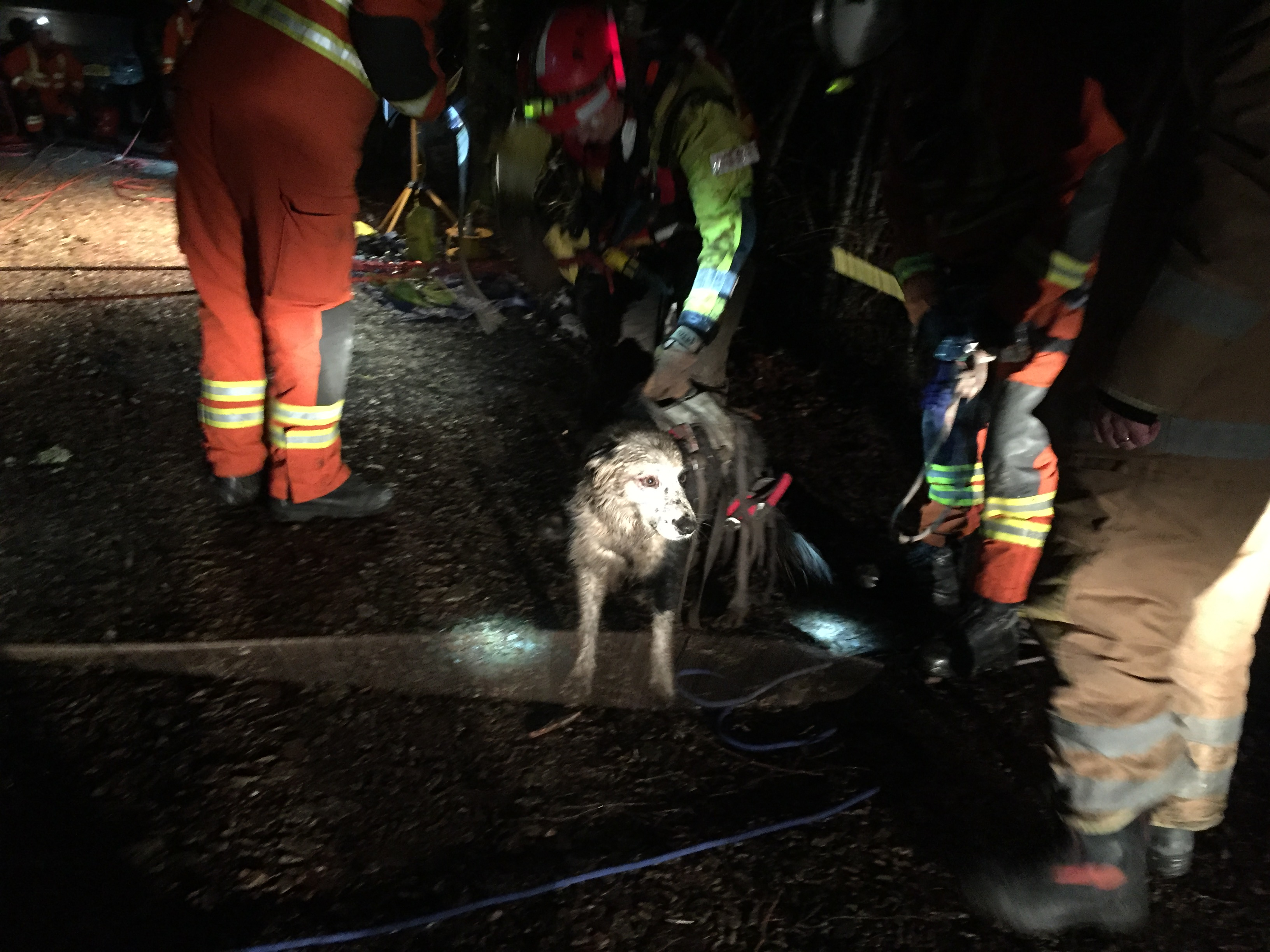 SFRS saved dog from ravine at Blair Atholl
