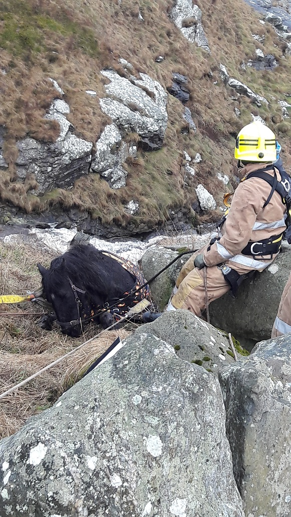 Crews rescue horse trapped down a cliff