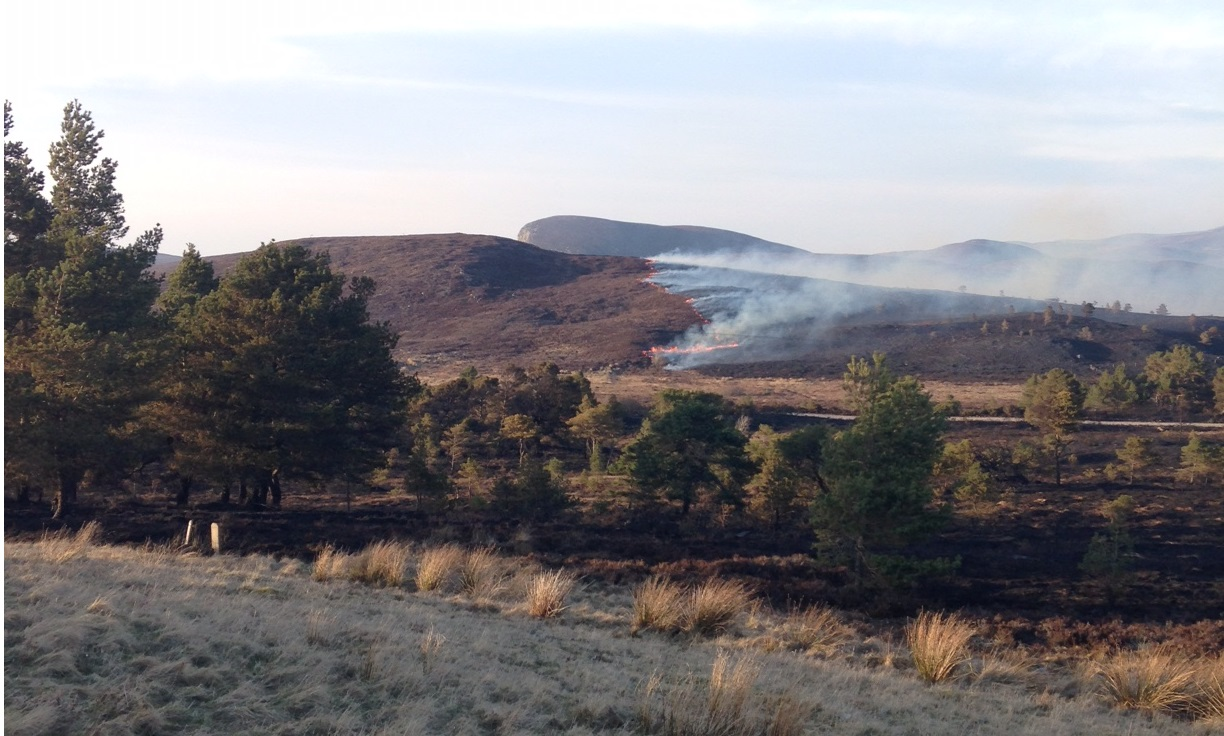 Wildfire in Dornoch (update)